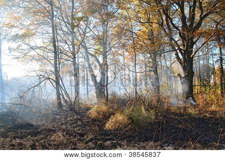 smoke after fire in oak wood
