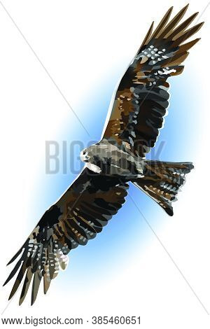 The Black Kite Has Spread Its Wings Wide And Soars Against The Blue Sky. Natural Background With A F
