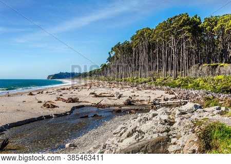 The Pacific coast is strewn with the remains of trees and algae.  Road to Knight's Point Lookout is an unforgettable  landscape. Travel to the ends of the world. New Zealand, South Island