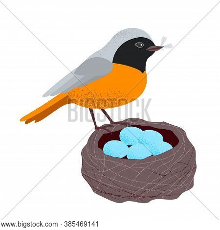 Redstart Is A Eurasian And North African Songbird Related To The Chats, Having A Reddish Tail And Un
