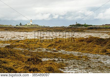 Lighthouse On The Isle Of Ornsay Seen From Isle Of Skye In Scotland. Exposed Seaweed And Mudflat At