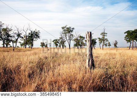 Dried Trees In The Steppes In Hot Summers