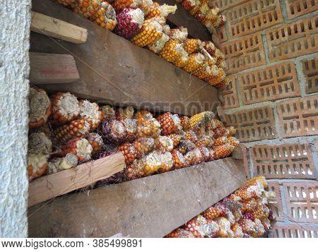 Corn Cobs Inside Of A Galician Corn Storage Granary Or Horreo. Galicia, Spain