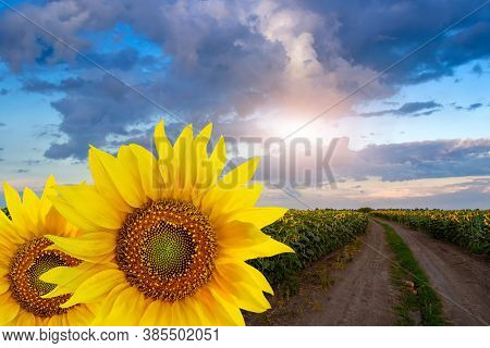 Rustic Sunflower Field And Countryside Road Collage. Rural Landscape With Beautiful Evening Sky. Roa
