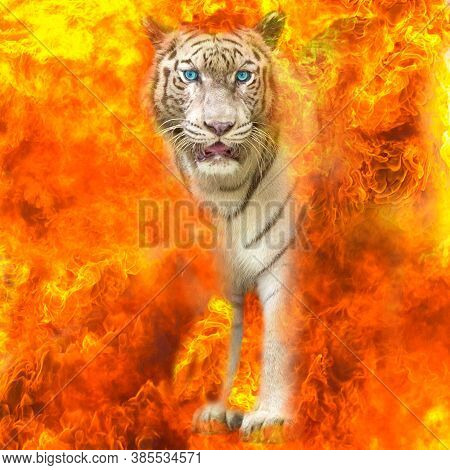 White Bengal Tigers Gazing Through From The Flames.