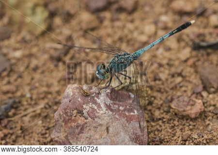 Blue Dragonfly On The Rock,