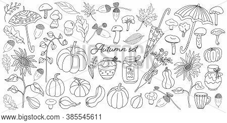 Doodle Autumn Set With Pumpkins, Mushrooms, Umbrellas, Leaves, Sunflowers, Jar Of Jam, Honey, Physal