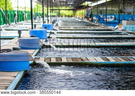 Water Flow Treatment System From The Water Pump Pipe At Fish Farm.water Gushing Out Of The Pipe From