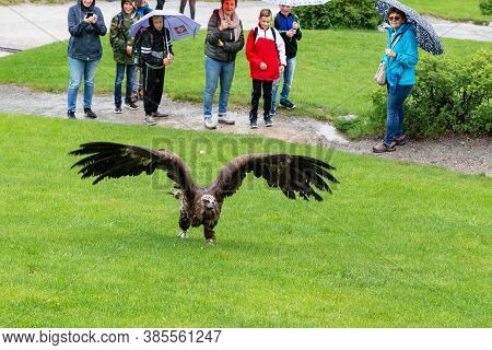 Werfen, Austria - May 20, 2019: Unidentified People Watch As A Tamed Vulture Takes Off From The Lawn