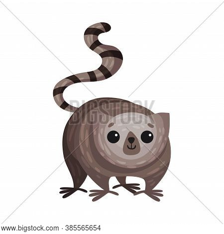 Lesser Galago Primate As African Animal Vector Illustration
