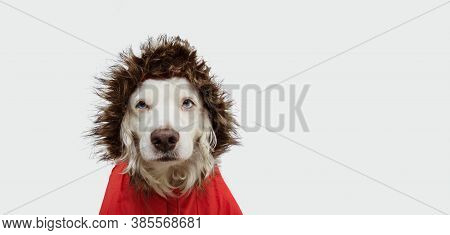 Autumn  Puppy Dog Wearing A Red Parka, Coat, Isolated On White Background.
