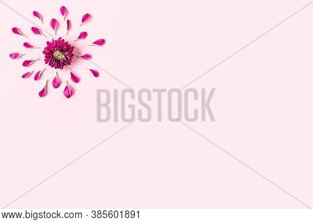 Pink Chrysanthemum On A Pink Background With A Space For Text. Layout Of Pink And Green Petals On A