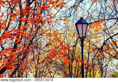 Fall October park landscape - orange colorful fall trees and metal lantern on the background of yellowed fall leaves in the fall city park. Fall city background