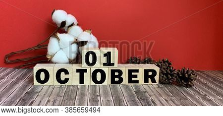 October 1.october 1 On Wooden Cubes.vase With Cotton On A Red Background.autumn .calendar For Octobe