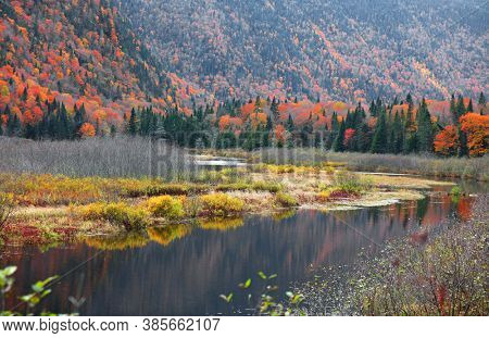 Colorful autumn bushes by the river in Quebec province countryside