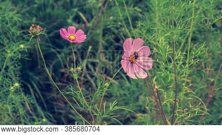A Flower In The Garden,a Spider Crawling On Petals,a Plant In Green Leaves,close-up,a Picturesque Pi