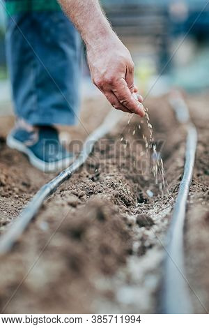A Man Sows Seeds In The Ground, A Watering Hose Is In Rows, Selective Focus