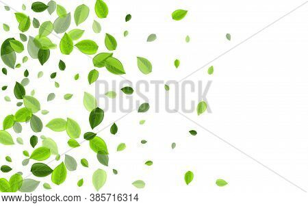 Forest Foliage Fly Vector Template. Falling Greens Backdrop. Mint Leaves Transparent Pattern. Leaf M
