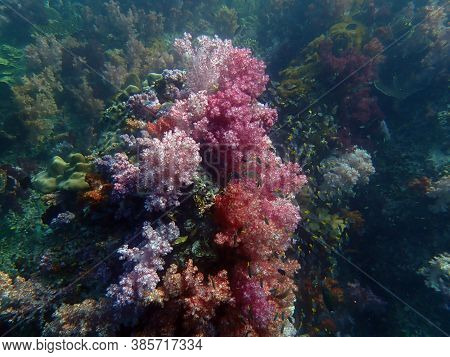 Colorful Coral Reef With Fish At Lipe Island, Andaman Sea, Indian Ocean, Thailand, Nature Photograph