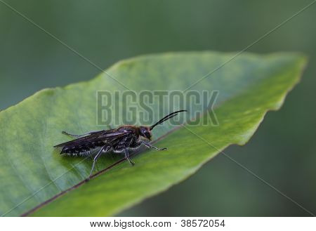 insect on leaf macro