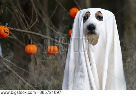 Dog Sits Like A Halloween Ghost In The Forest, With A Pumpkin Lantern Or Light, Scary And Creepy. Sp