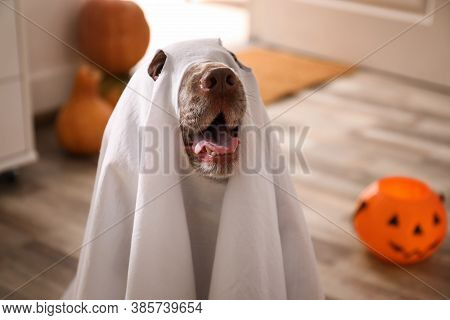 Adorable English Cocker Spaniel Dressed As Ghost At Home. Halloween Costume For Pet