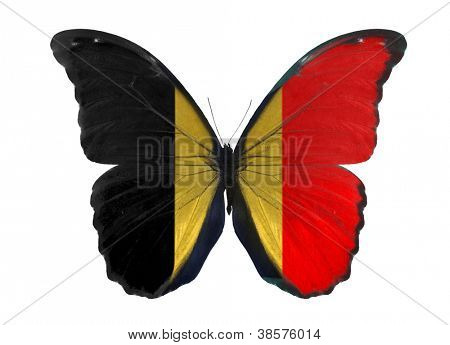 poster of macro photo of butterfly in Belgium flag colors isolated on white background