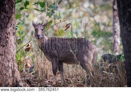 Dears In The Wild With Trees And Grasses