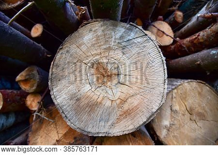 Large Quantity Of Cut And Stacked Timber In Forest For Transported. Stack Of Cut Logs Background. Lo