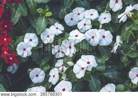 Beautiful White Flowers With Red Dots In The Park