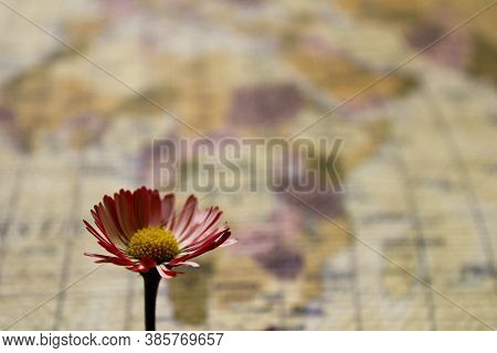 Delicate Red Flower On The Blurred Background Of A Geographical Map