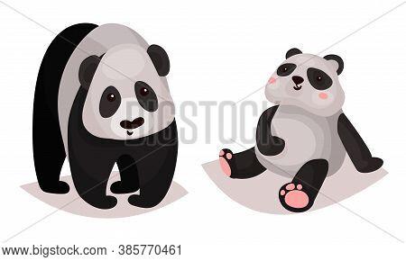 Cute Giant Panda Bear As Carnivore Forest Animal Vector Illustration
