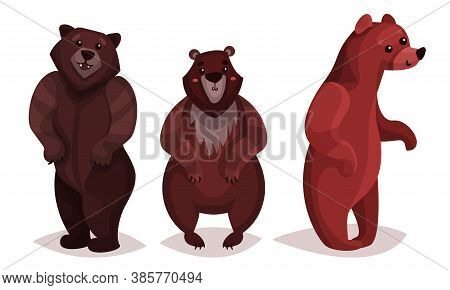 Cute Brown Bear As Carnivore Forest Animal Vector Illustration