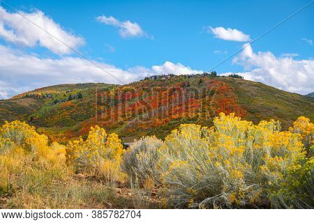 Park City, Utah, USA foliage along the Wasatch Back in autumn.