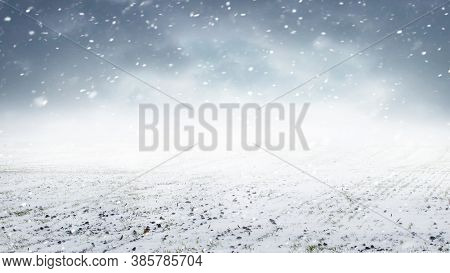 Snowfall In The Field. Field With Winter Wheat And Cloudy Sky During Snowfall