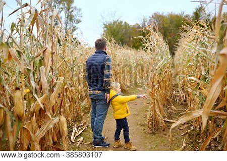 Back View Of Family Walking Among The Dried Corn Stalks In A Corn Maze. Little Boy And His Father Ha