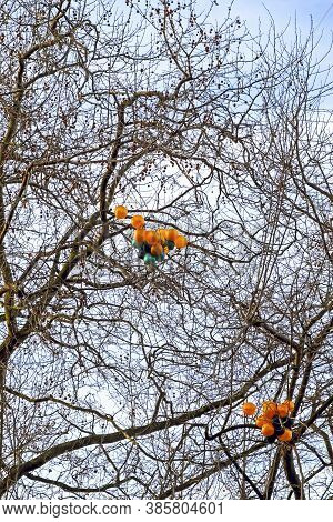 Partially-deflated Balloons Trapped In The Top Of A Tree