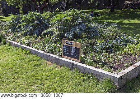 Bristol, Uk - May 26, 2015: Vegetables Planted For Public Consumption By Edible Bristol In Castle Pa