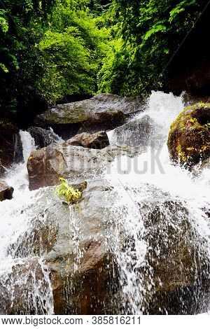 Deep Forest River Wild Waterfall View. Forest River Wild Landscape. Wild River Stream Rocks Flowing.