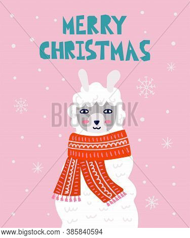 Christmas Llama Postcard. Winter White Llama Face In Scarf On Snowy Pink Background, Merry Xmas And