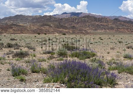 Dry Steppe Landscape In Ottuk, Kyrgyzstan, With Three Trees, Purple Flowers And Red Mountains.