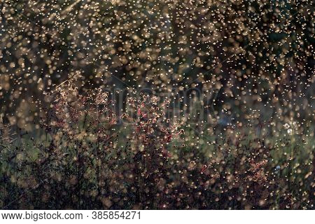Blurred Nature Background. Small Midges Fly In The Rays Of Light. Insects Swarm In The Rays Of The S