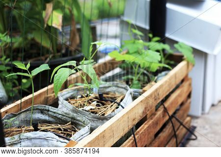 Home Gardening In Wooden Basket With Small Water System