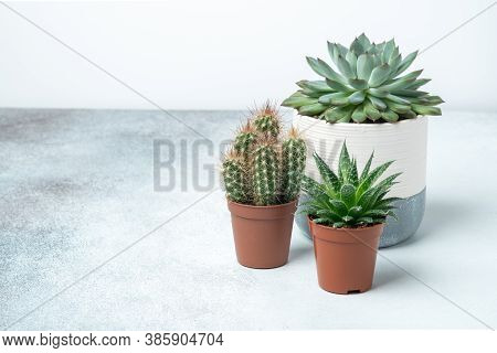 Various Succulents In Different Pots On Stone Table Indoor. Plant Transplantation. Concept Of Indoor
