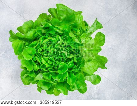 Lettuce. Fresh Organic Salad Leaves. Vegetables. Proper Healthy Dietary Nutrition. Vegetarian And Ve