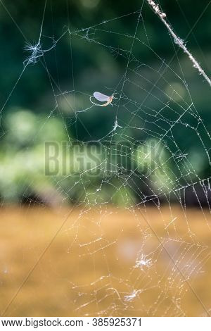 Destroyed Spiderweb With Pollen And Dead Insents In Front Of Green Background