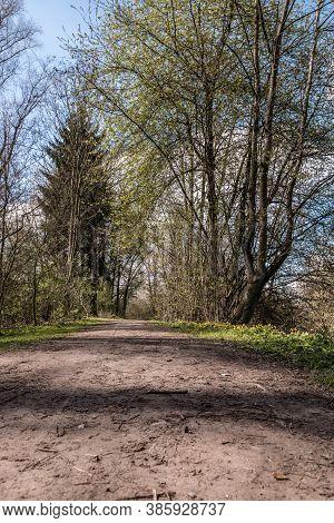 Muddy Woodland Path Through The Green Countryside