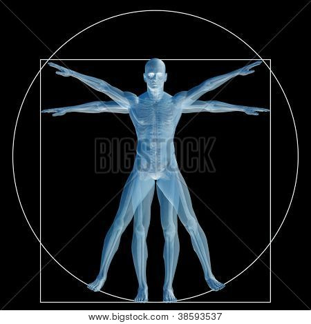High resolution Vitruvian human or man as a concept,metaphor or conceptual 3d anatomy body for biology,anatomical,Leonardo,proportion,medicine,symbol,physiology,skeleton,health,humanity or morphology poster