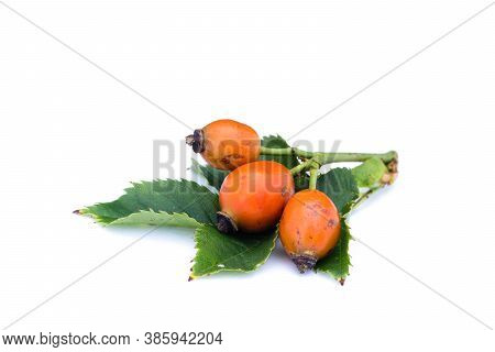 Rose Hips Isolated On White Background Cut Out