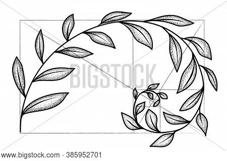 Floral Fibonacci Spiral. Sketch Of  Harmony Concept, Golden Ratio. Vector Illustration